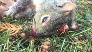 Marauder Backyard Pest Control 7(, 2015-12-13T20:20:54.000Z)