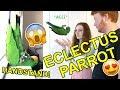 PET PARROT Q&A! (ft. Archie the Eclectus Parrot)!