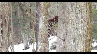 Bigfoot in National News All Month Long