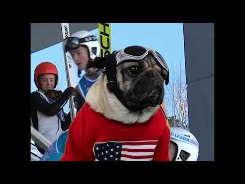Doug The Pug - 2018 Winter Olympics