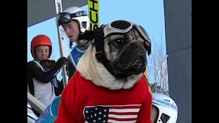 Doug The Pug - 2018 Winter Olympics