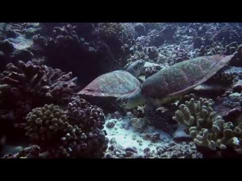 Diving Rangiroa - Tuamotus, Tahiti, French Polynesia