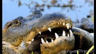 Titanoboa prehistoric anaconda Giant snake dinosaur meet up with human and excavator