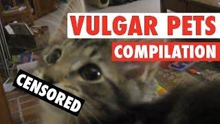 Vulgar Pets Compilation || NSFW Funny Pets