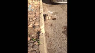פיספוסי חתולה