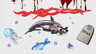 Почему косатка - гроза морей?— Научпок