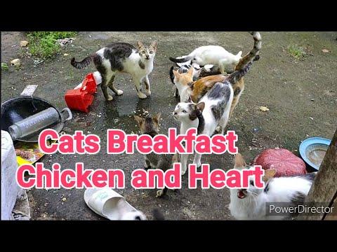 kucing-sarapan-pagi-suaranya-meang-meong...