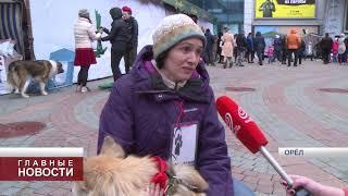 В Орле прошла выставка бездомных собак и кошек