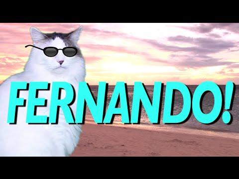 Happy Birthday Fernando Epic Cat Happy Birthday Song