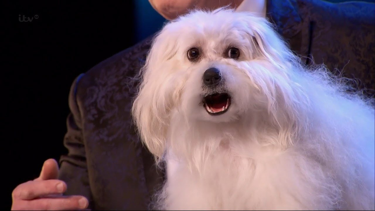 Download Britain's Got Talent 2015 S09E01 Marc Métral with his Hilarious Talking/Singing Dog Wendy Full Video