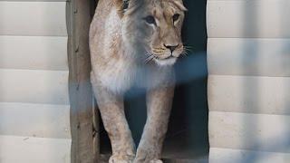 «Черный рынок» редких животных уходит в Интернет (новости)