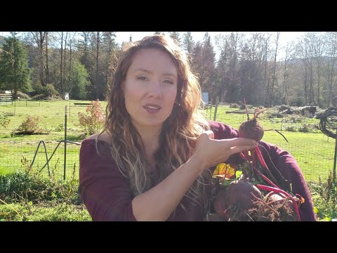 Preserving Food for Winter | Growing crops during fall & winter | Winter Gardening