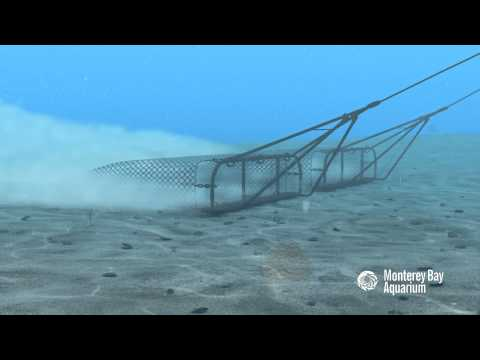 How Seafood is Caught: Dredging