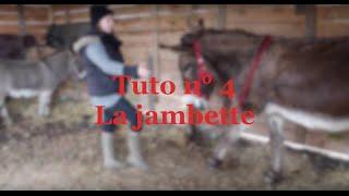 Tuto n°4 : comment apprendre la jambette à son âne