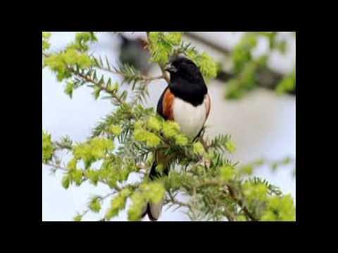 Chim chích bông-bé Khánh Hằng 4tuổi
