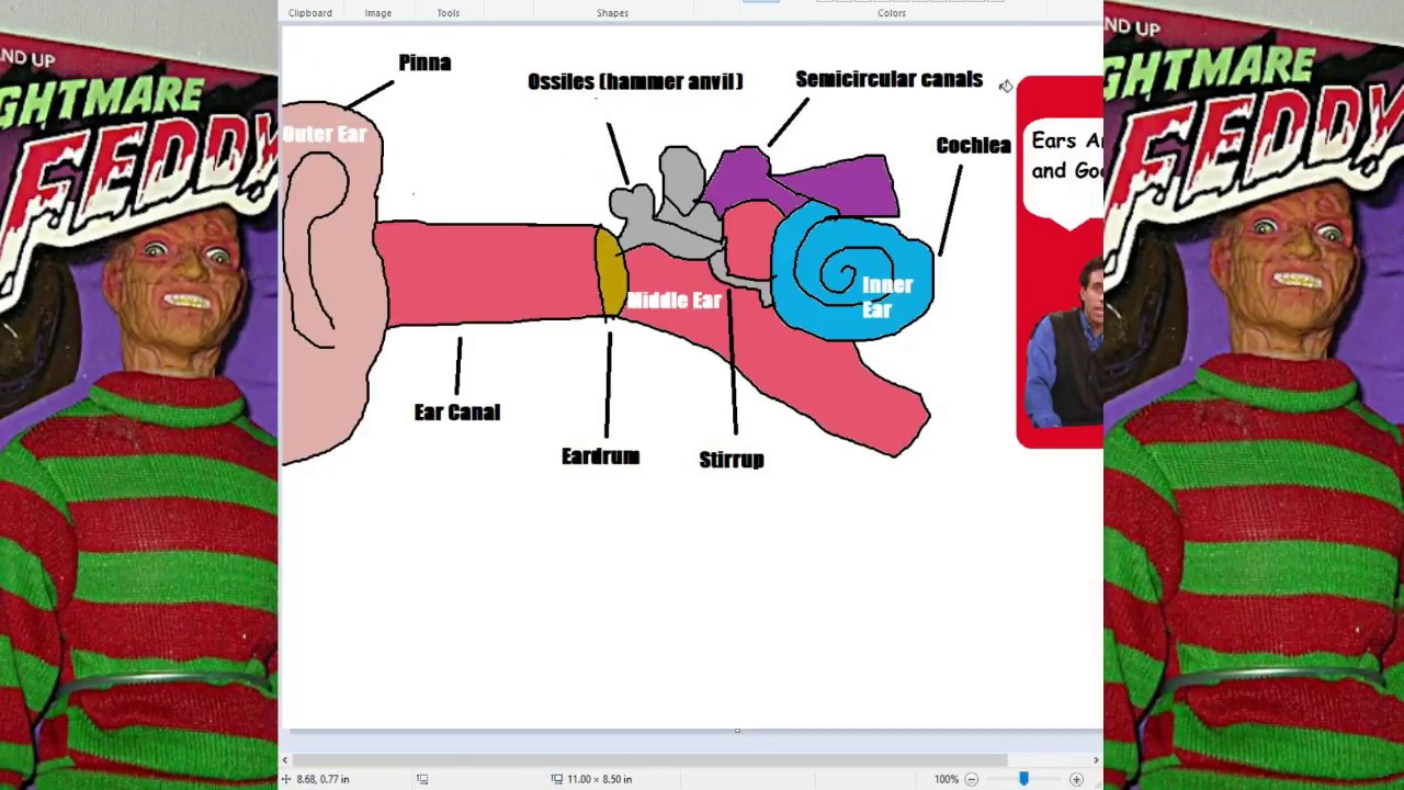 hight resolution of ear diagram project for school