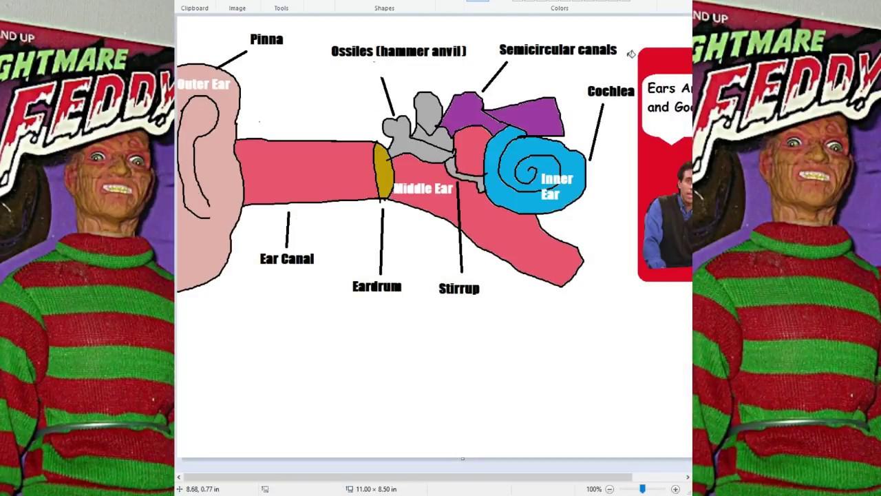 medium resolution of ear diagram project for school