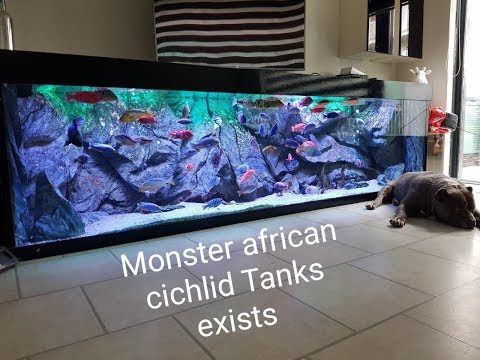 Best looking and most colorful african cichlid tank on youtube