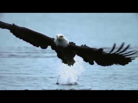 Entrenamientos Aguila
