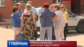 Крысы атакуют жителей Авдотьина