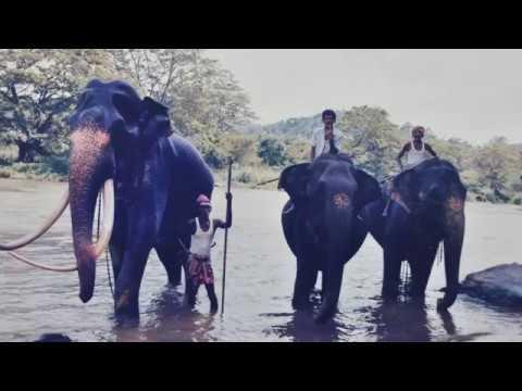 #elephantparade