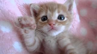 子猫レっちゃん、眠る数秒前 thumbnail