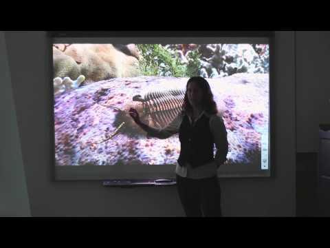 Palaeo 200 | Trilobites