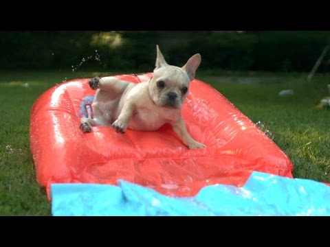 Puppy's First: Dog Days Of Summer