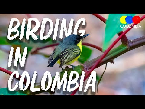 Birding in Colombia - Colombia Birdwatching