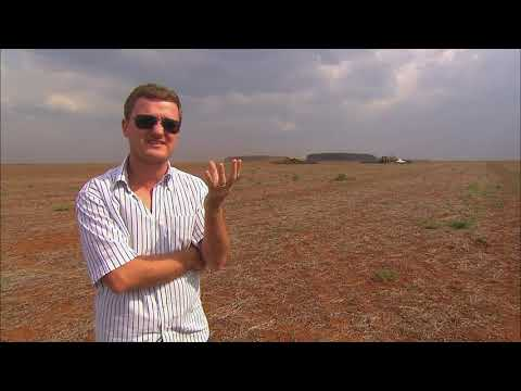 Le soja, un désastre pour la planète ?