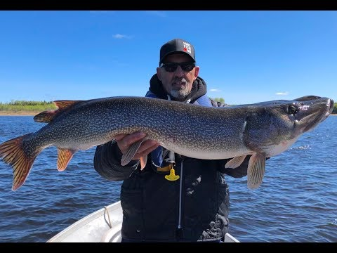 Phenomenal Fly-in Fishing Action At Jackson's Lodge & Outposts - Manitoba Hot Bite