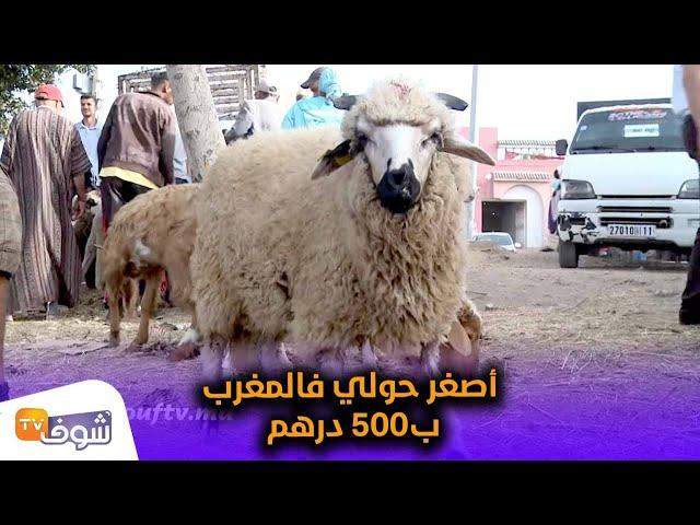 شوفو أصغر حولي فالمغرب ب500 درهم