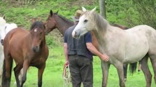 Spiegelspiel mit Pferden