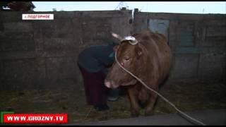 Частные предприниматели все чаще выбирают животноводство как вид деятельности