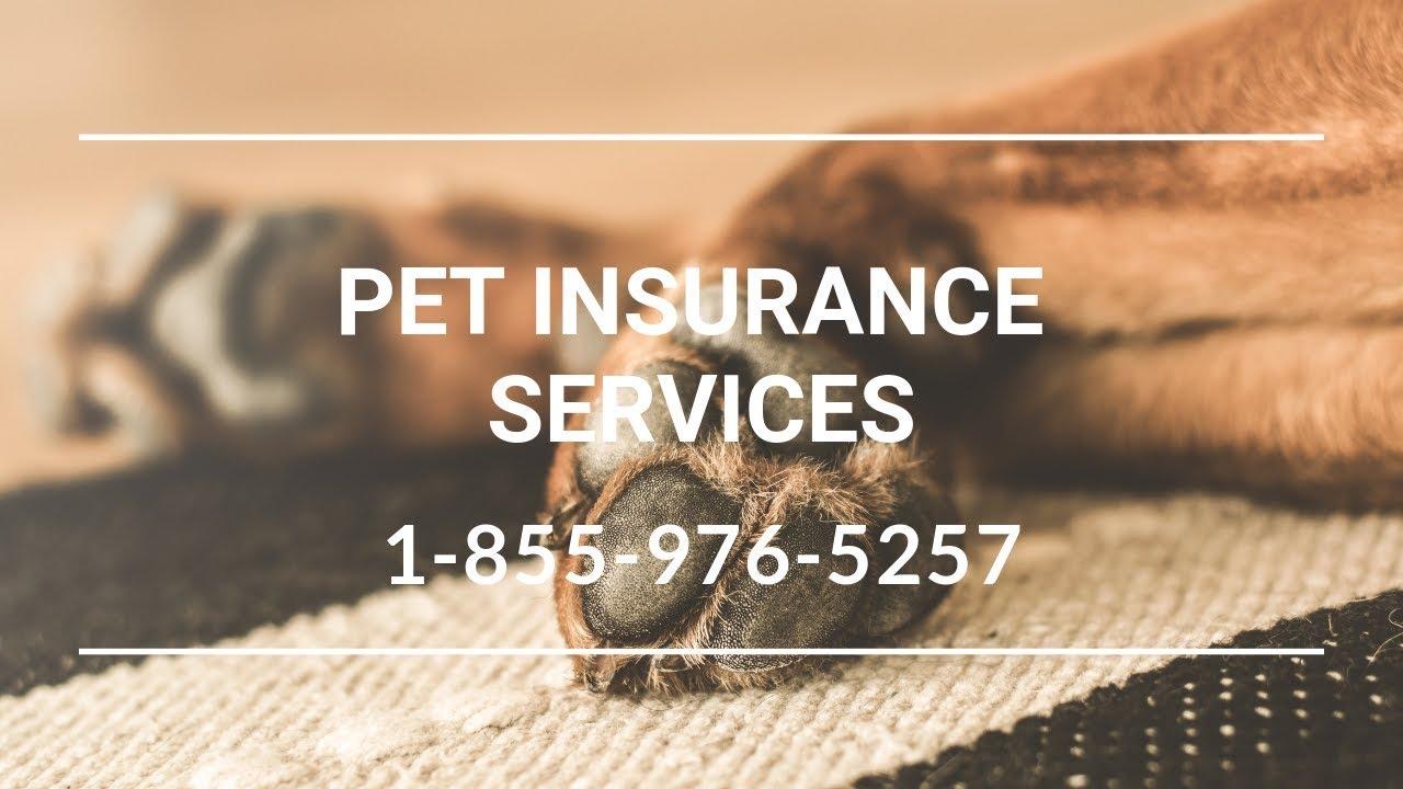 Pet Insurance Smithville Flats NY - Affordable Pet Insurance Reviews