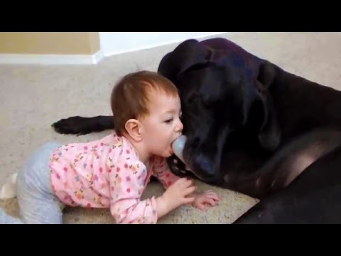 Funny Dogs and Babies, Crazy Animals Videos, Animals TV