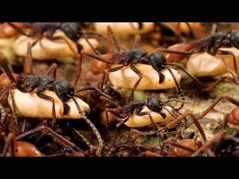 самые опасные черви в организме человека
