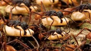 Самые опасные насекомые в мире часть 2