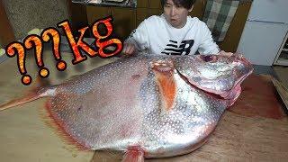 【お宝映像】赤く輝く巨大マンボウをさばいてさばいて。刺身にしてぺろり。お味が衝撃。Sashimi a huge sunfish thumbnail