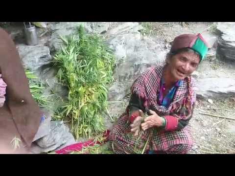PART 2 Kasol Malana song while making Malana cream Magical Parvati Valley
