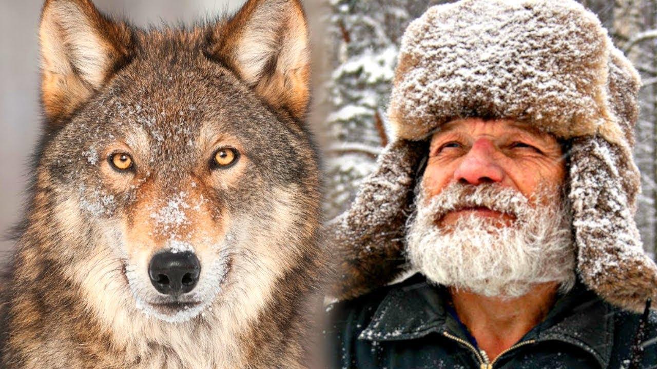 Роковая встреча в лесу... Как волк помог деду Егору ...