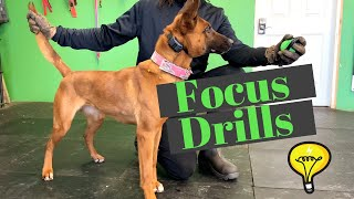 How to Build Focus with You Dog | Grassroots K9
