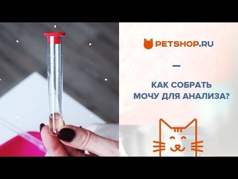 Как собрать мочу у кота для анализа