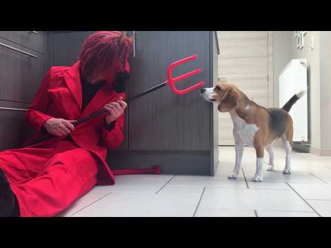 Dogs Vs Funny Devil Prank   Funny Dogs Louie and Marie