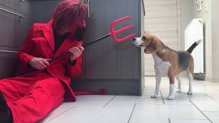 Dogs Vs Funny Devil Prank | Louie the Beagle
