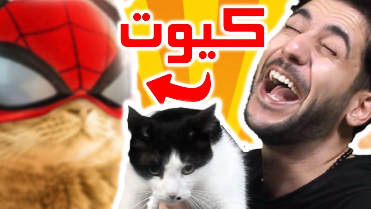 أفضل ١٠ قطط في عالم الألعاب