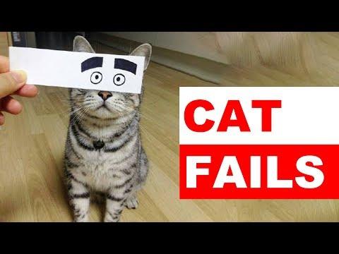 Hilarious Cat Fails   Funny Cat Fails Compilation 2019 - Funny Pet Videos