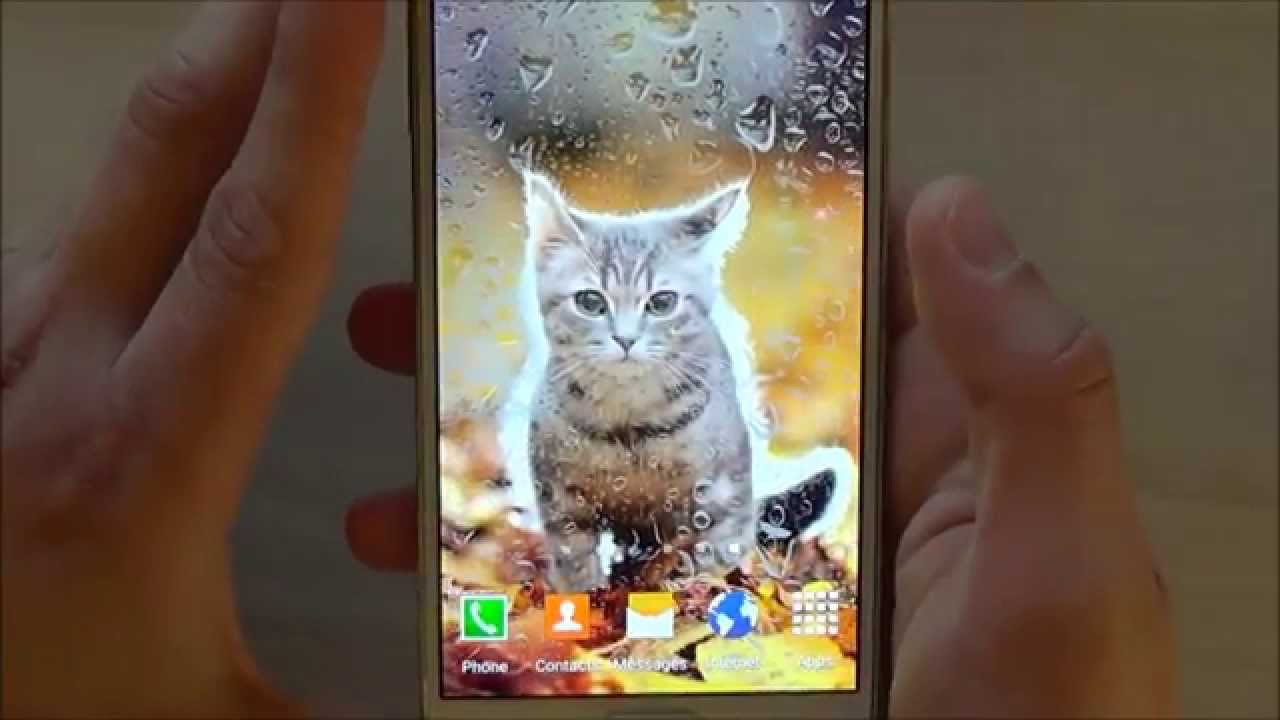 Cute animals live wallpaper free animated screensaver - Free funny animal screensavers ...