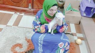 روتينى مختلف مع القطة واية سبب التسمم حسبى الله ونعم الوكيل