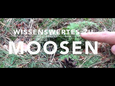 Ohne Moos nix los! Wissenswertes zu Moosen (1/2)